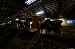 Смоленские коровы не хотят давать молока