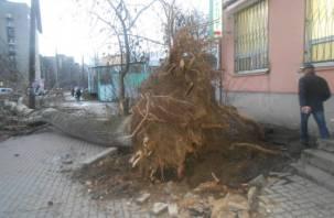 Женщина погибла под упавшим деревом