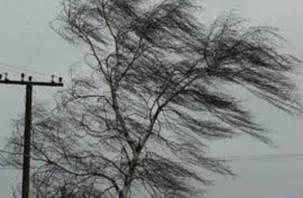 Штормовой ветер бушует в Смоленске уже сутки