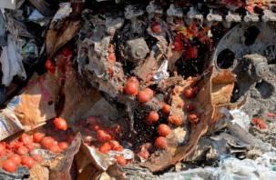 В Рудне уничтожили полторы тонны помидоров