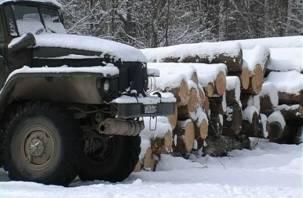 Смоленскую область атакуют «черные лесорубы»