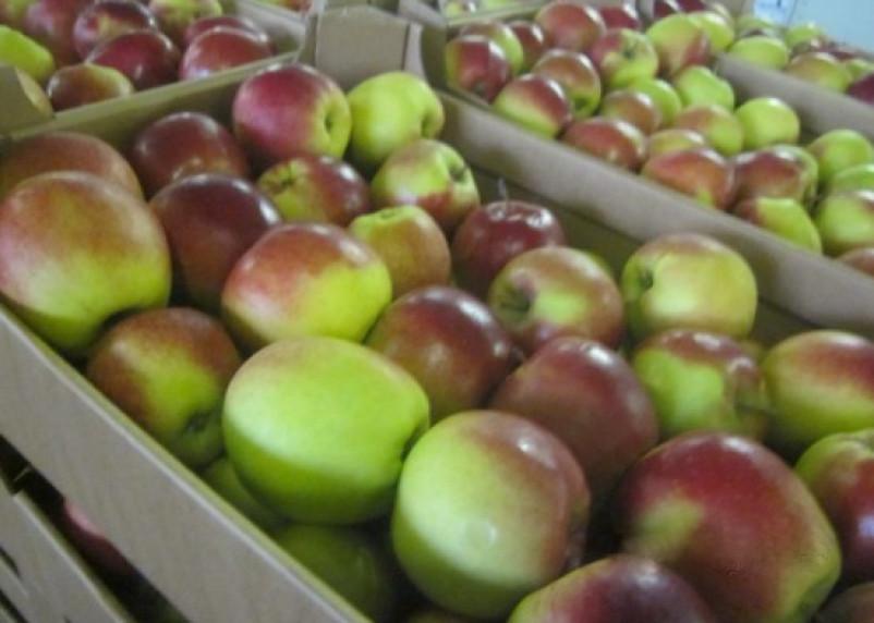Смоленские таможенники задержали груз с «полиуретановыми» яблоками