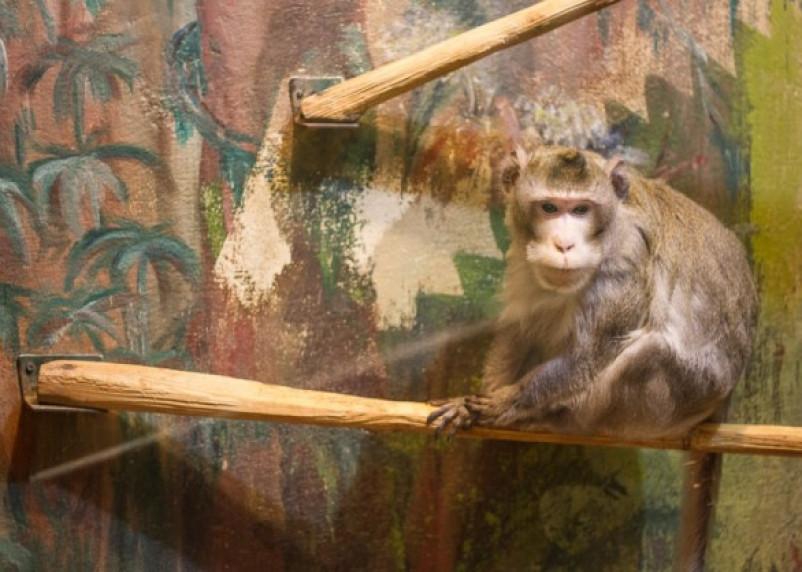 В Смоленском зоопарке стартует акция «Лакомство для питомца»