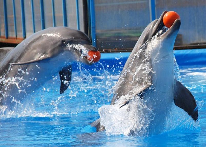 Смоляне собираются протестовать против дельфинария