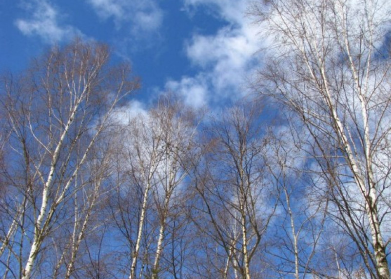 В Смоленске будет тепло и облачно