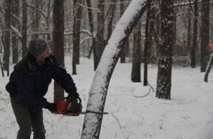 В Смоленске избавляются от деревьев