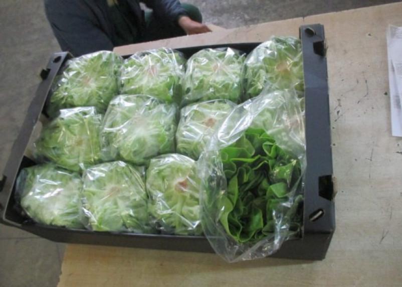 Через Смоленск пытались провезти польские овощи под видом марокканских