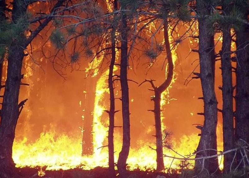Смоленская область вошла в список пожароопасных регионов