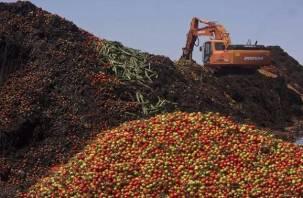 Смоленские яблоки раздавят уральские гусеницы