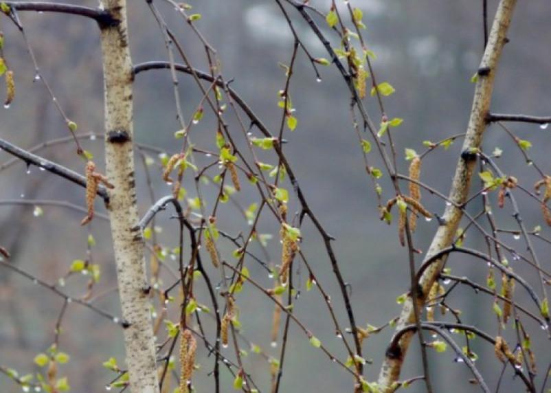 На выходных Смоленскую область накроет черноморский циклон