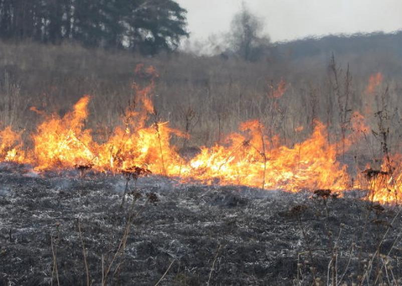За выходные на Смоленщине 31 раз жгли траву