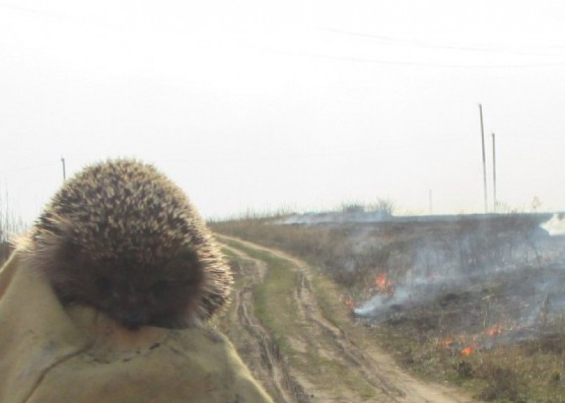 На Смоленщине из-за пала сухой травы гибнут животные