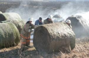 В Смоленском районе сгорело семь рулонов сена