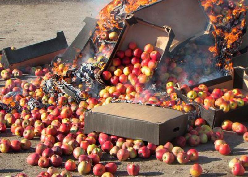 Под Смоленском уничтожили 77 тонн яблок