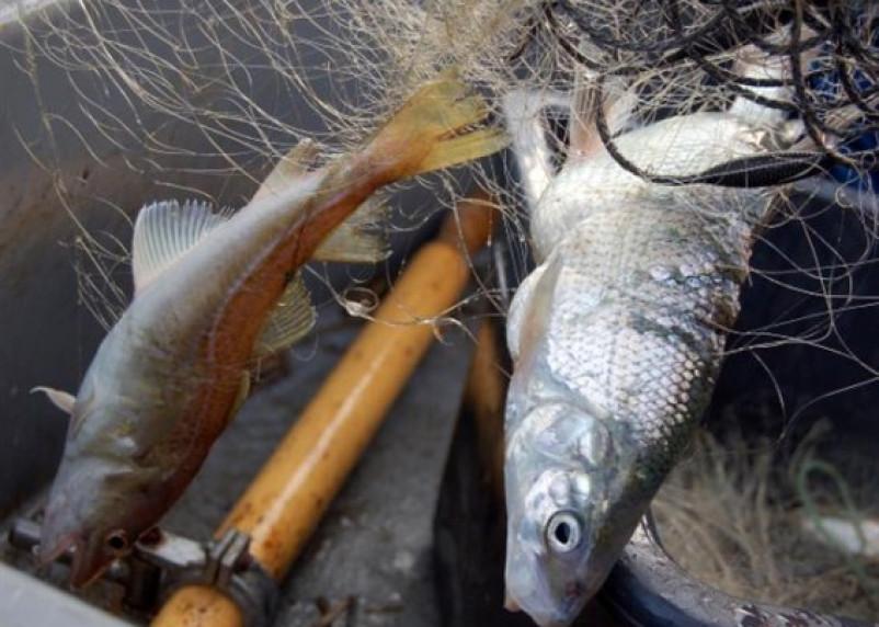 Уголовным делом завершилась рыбалка брянцев на Смоленщине