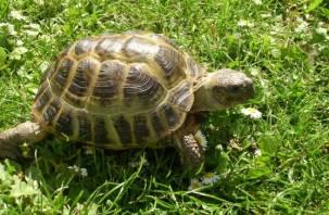Смолян приглашают отметить День черепахи