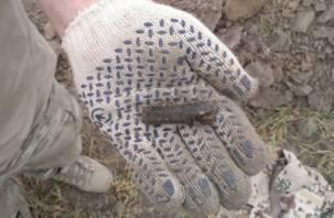 Под Киевом нашли останки смоленского солдата