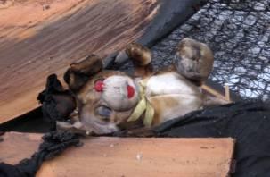 В Рославльском районе в огне погибли два ребенка