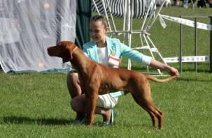 В Смоленске прошла выставка собак. Фоторепортаж