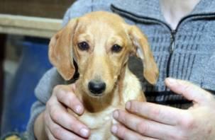 Смолянка не понесет наказание за издевательство над собакой-«парашютисткой»