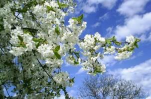В выходные в Смоленске будет тепло и солнечно
