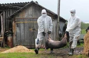 Смоленские кабаны принесли чуму в Калужскую область