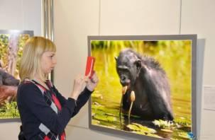 Смоленские «Соседи по планете» вошли в топ-10 самых интересных выставок России