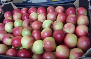 Через Смоленск пытались провезти 20 тонн яблок вместо бройлеров