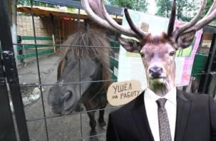 Смоленские зоопарки и руководящие олени