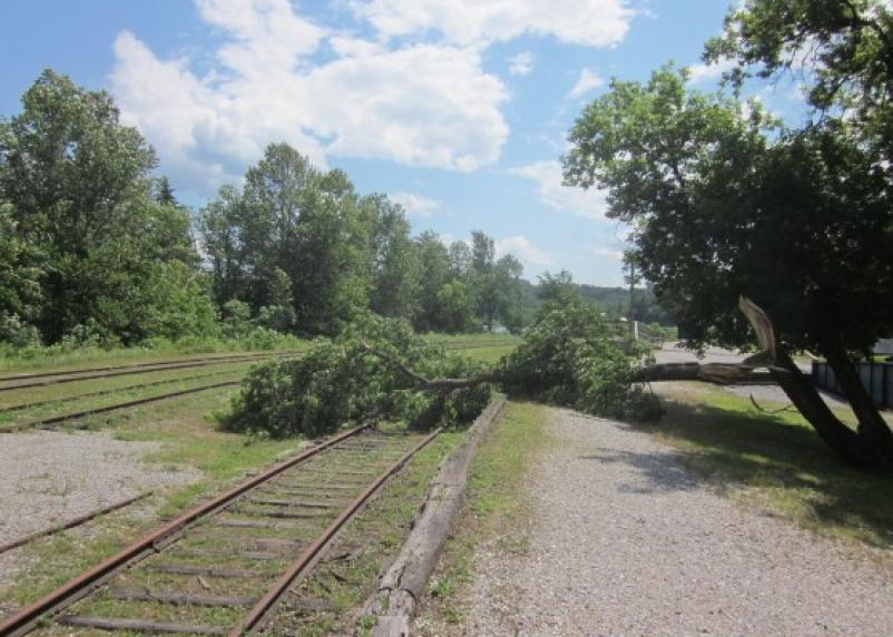 В Смоленской области рухнувшее дерево заблокировало движение поездов