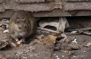 Управляющие компании в Краснинском районе наказали за крыс