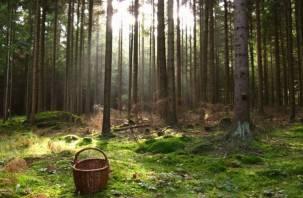 В Ярцевском районе в лесу заблудилась женщина