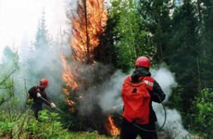 На Смоленщине пройдут соревнования лесных пожарных