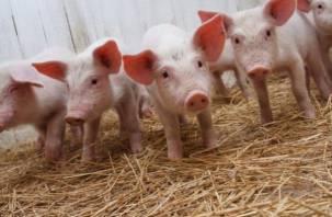 В Смоленской области выявили очаг африканской чумы свиней