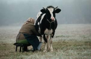 В Смоленской области стало больше мяса и меньше молока