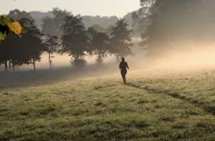 Потерявшаяся в ярцевских лесах женщина нашлась