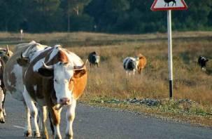 Водитель сбил корову в Духовщинском районе