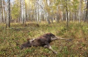 В Тёмкинском районе задержали браконьеров, застреливших лося