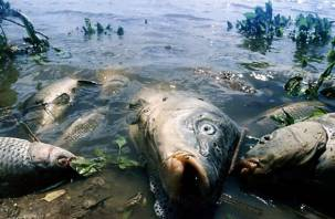 На восстановление экосистемы Днепра уйдут годы