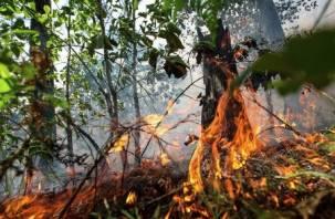 Смолян просят сообщать о пожарах в лесу по спецтелефону