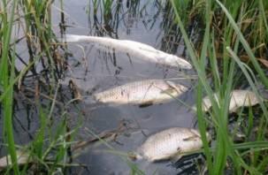 Дохлая смоленская рыба доплыла до Беларуси