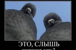 Кандидаты-одномандатники в Смоленской области не хотят тратиться на агитацию