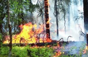 В шести районах Смоленщина введен особый противопожарный режим