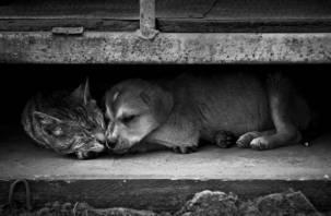 Cмолян просят помочь животным