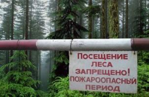 Смоленские леса стали пожароопасными