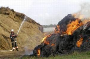 В Гагаринском районе сгорело три тонны сена