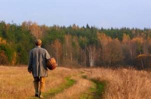 В смоленском лесу потерялся пожилой грибник