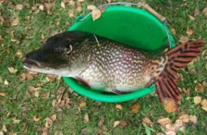 Смоленские рыболовы на соревнованиях поймали самую большую щуку