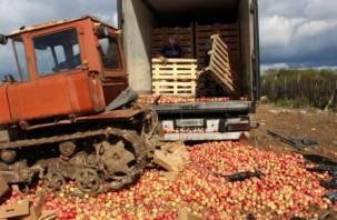 В Рудне закопали 17 тонн украинских яблок