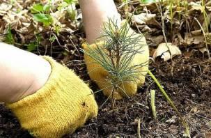 В Смоленске пройдет акция «Дерево за репост»